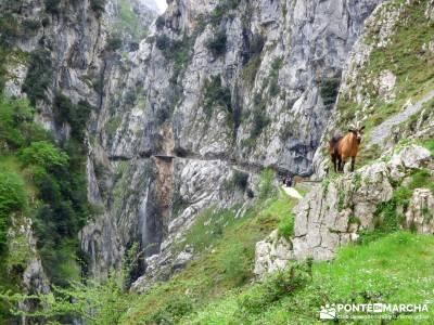 Ruta del Cares - Garganta Divina - Parque Nacional de los Picos de Europa;rutas por españa